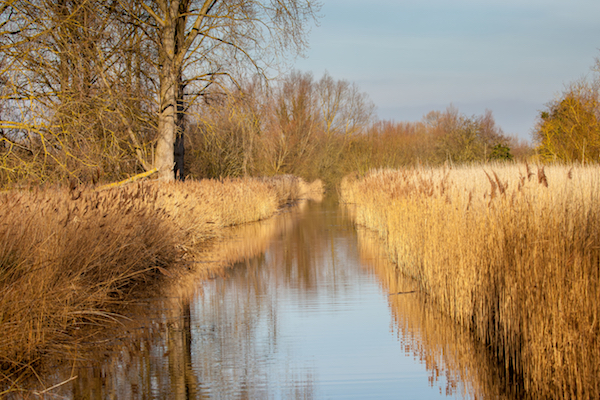 Reed beds at fowlmere